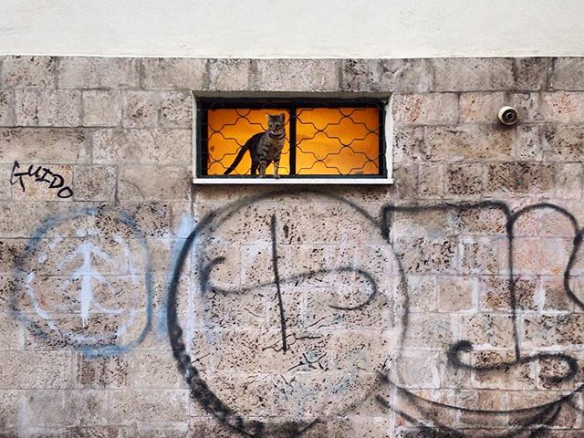 They're coming out of the walls. #catsoftelaviv #caturday