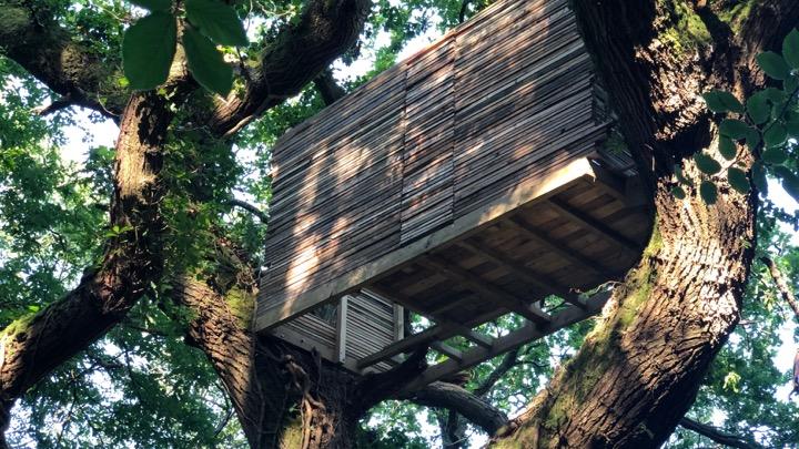 welsh treehouse.jpg