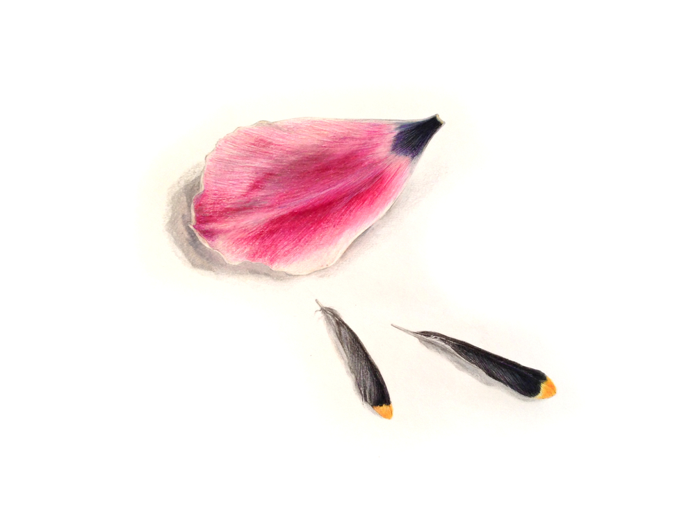 Tulip Petal and Feathers