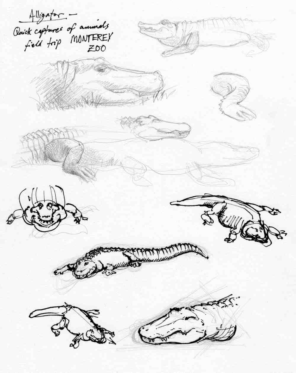Alligator Studies
