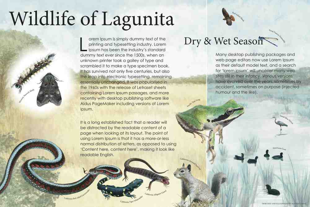 Wildlife of Lagunita—sample interpretive panel
