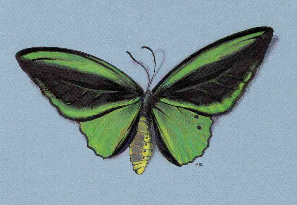Butterfly Study