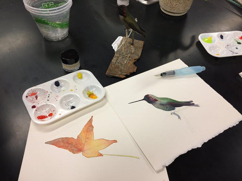"""Watercolor demonstration for my UC Santa Cruz course """"Natural History Illustration"""" in 2017.   Demostración de acuarelas durante mi curso """"Ilustración de Historia Natural"""" en UC Santa Cruz, 2017."""