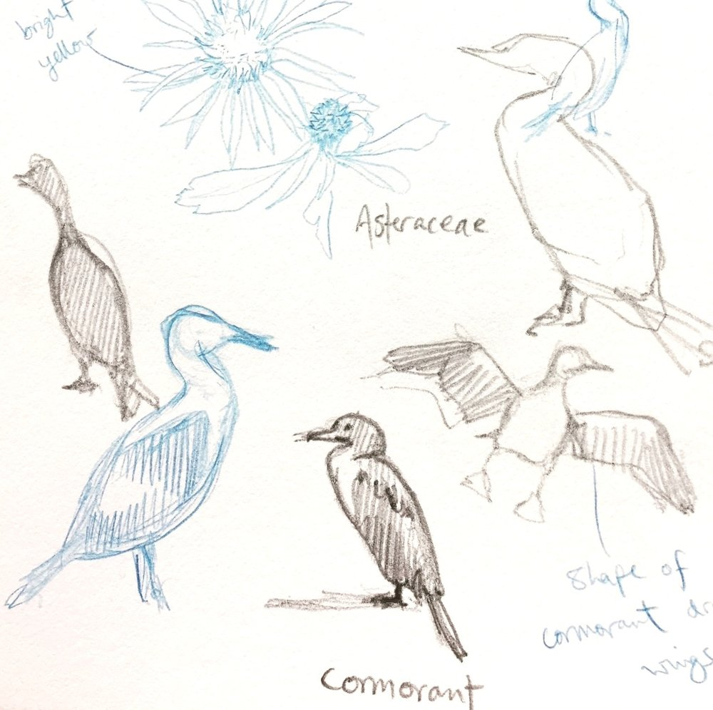 Close-Up of Shorebird Sketches