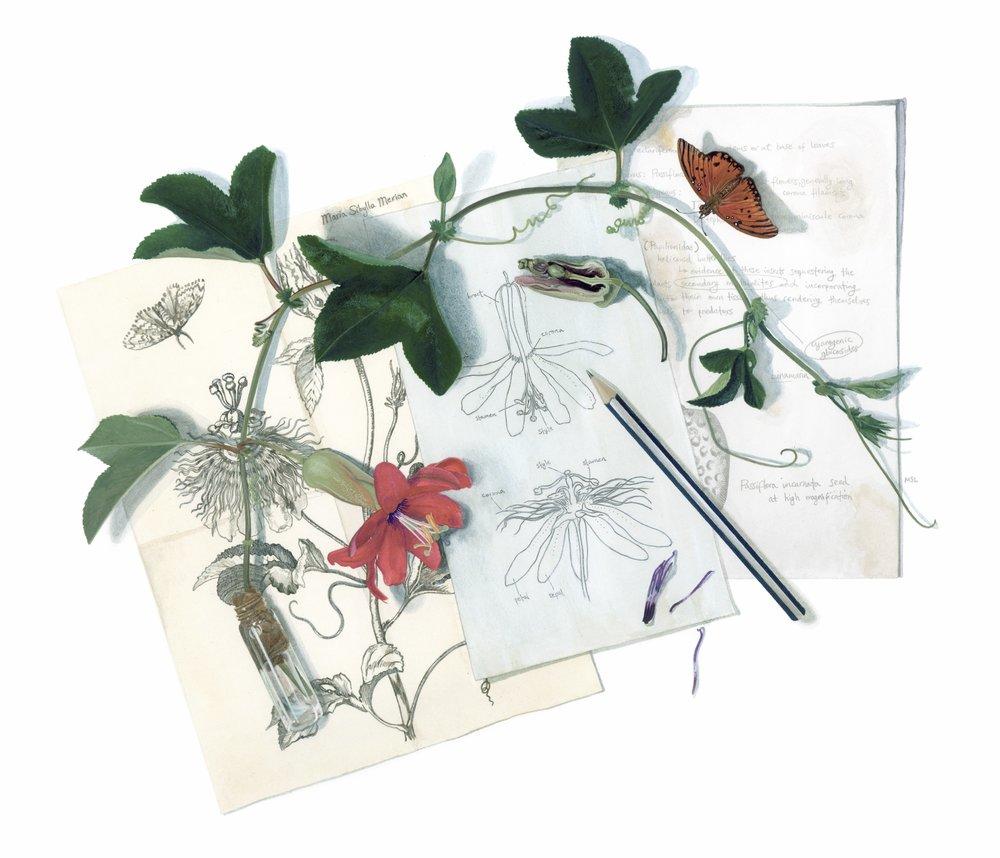 Passiflora Illustrator's Trompe L'Oeil