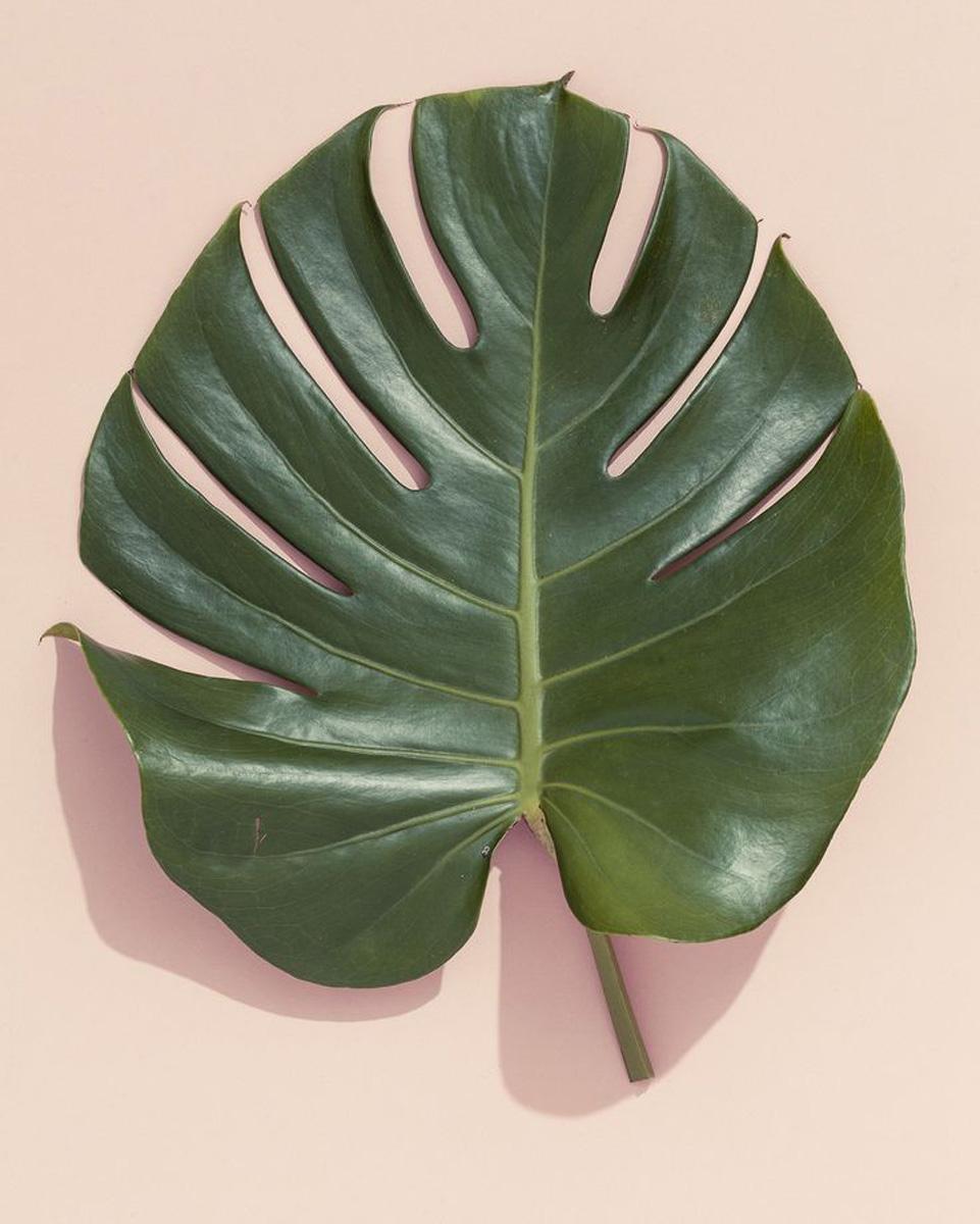 plant-inspiration-ninushko-2