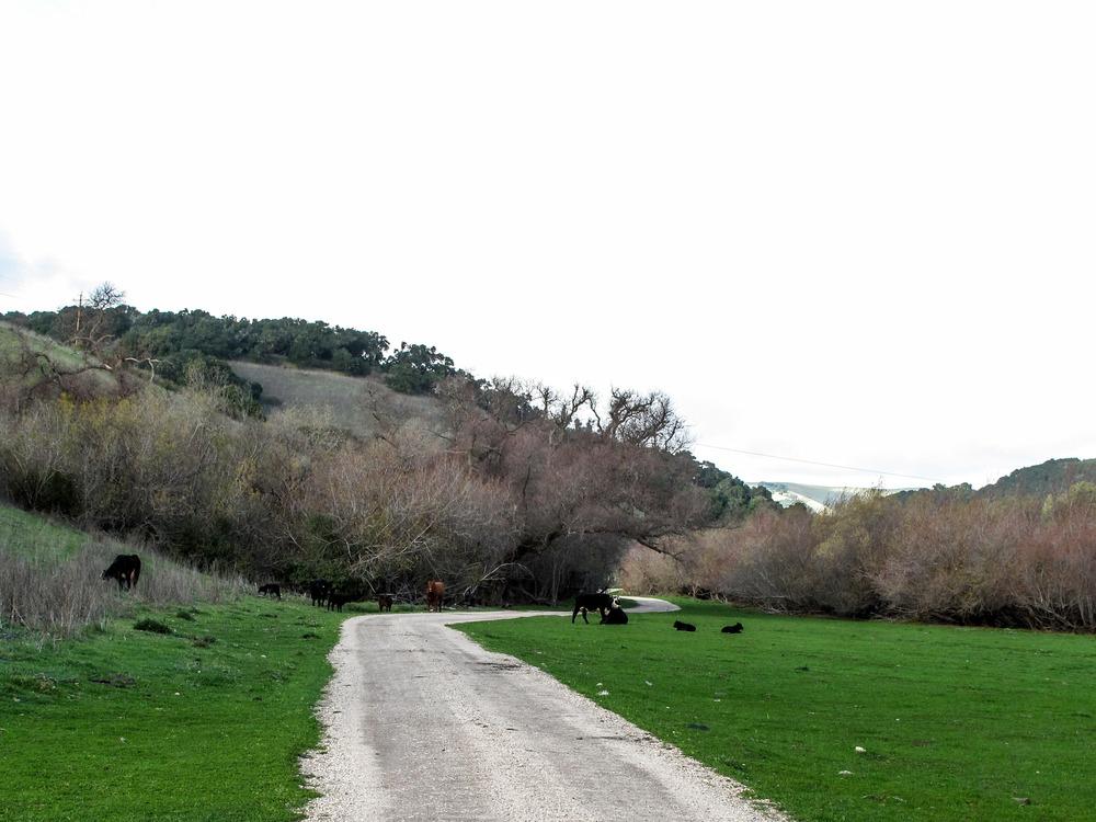 DGordin_080000_NSB_Ranch_0007.jpg