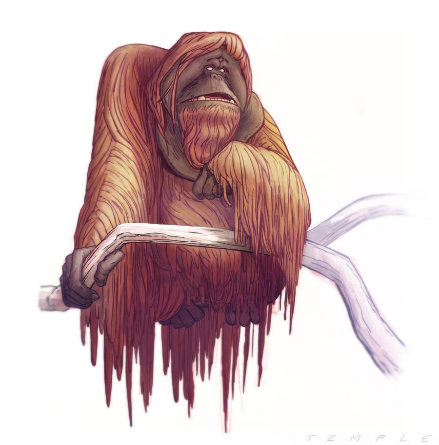 Orangutan2.jpg