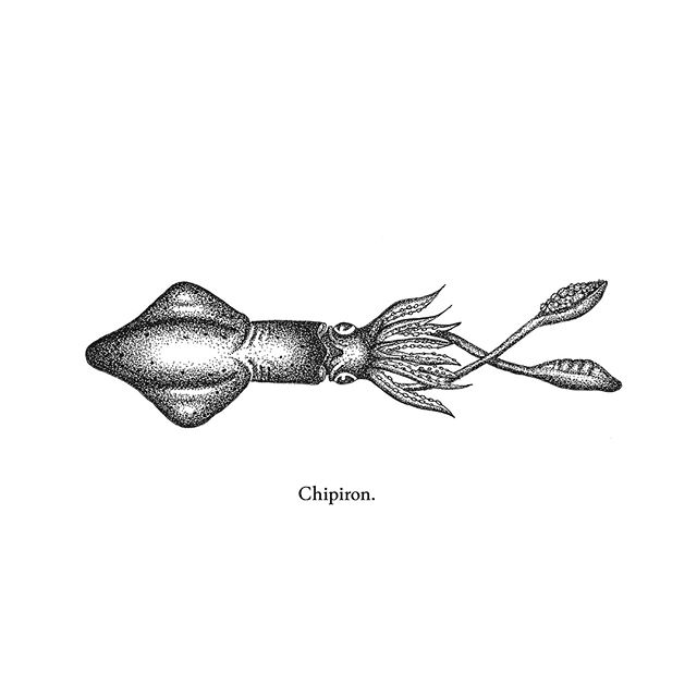 Fish From Here! .  Chipiron  Dessin réalisé au micron 0,05 .  #fishing #basque #chipiron #peche #fishart #illustration #ink #design #handdrawing #paysbasque #basquecountry #dessin #adour #bayonne #catchoftheday #fishing #artwork #calamar #identity #ocean #drawing #fishfromhere
