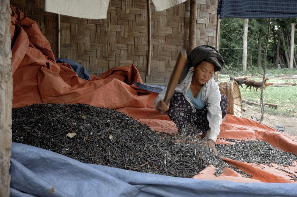 JV_Myanmar00677.JPG