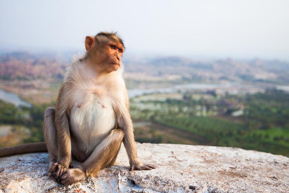 Hanuman Temple: Hampi, Karnataka