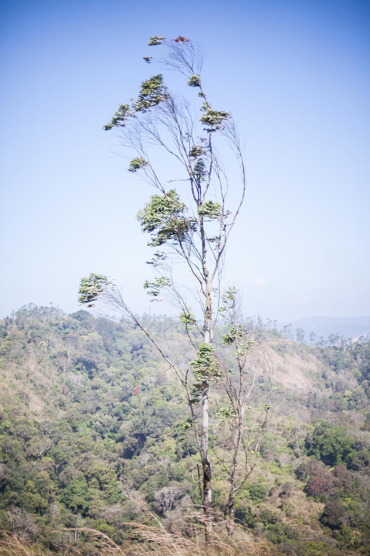 Periyar Wildlife Sanctuary, Kerala