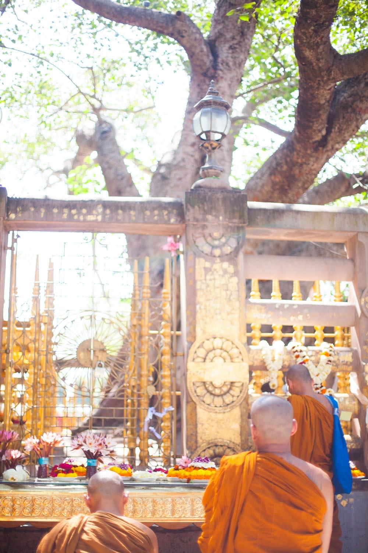 The Mahabodhi tree: Bodhgaya, Bihar