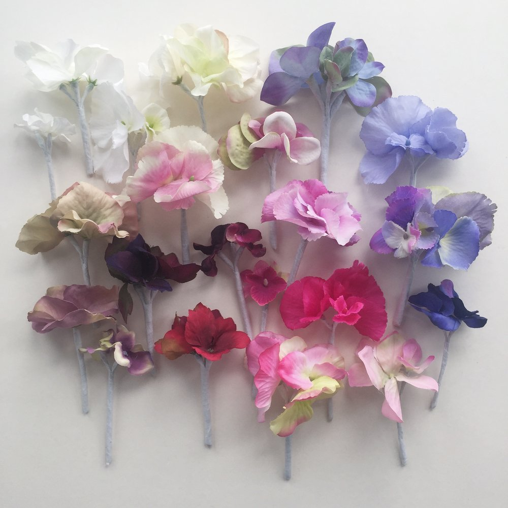 Hydrangea samples in my studio.