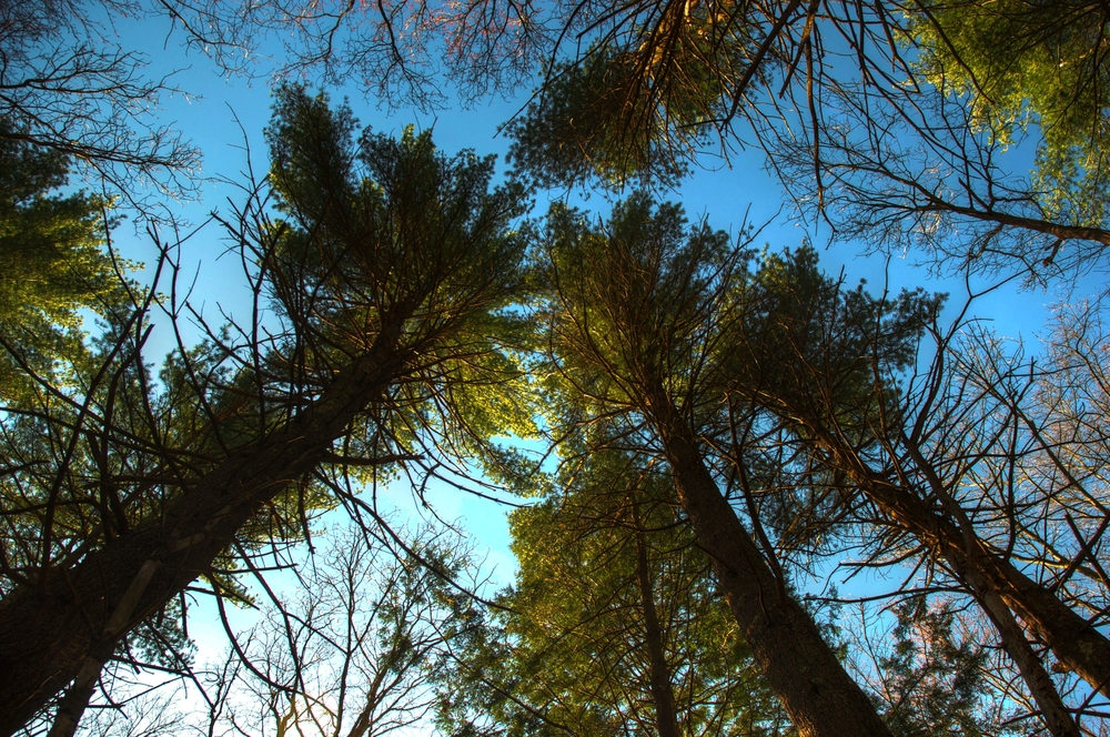 trees-HDR.jpg