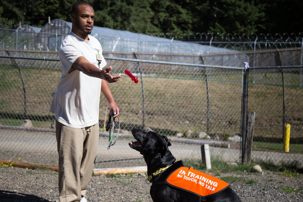 An incarcerated individual plays fetch with a dog from the dog program.