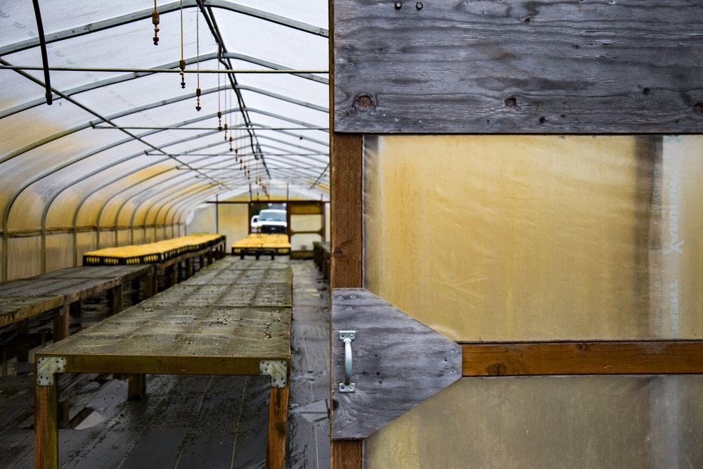 Inside one of the green houses used for seed production and storing plant-plugs.