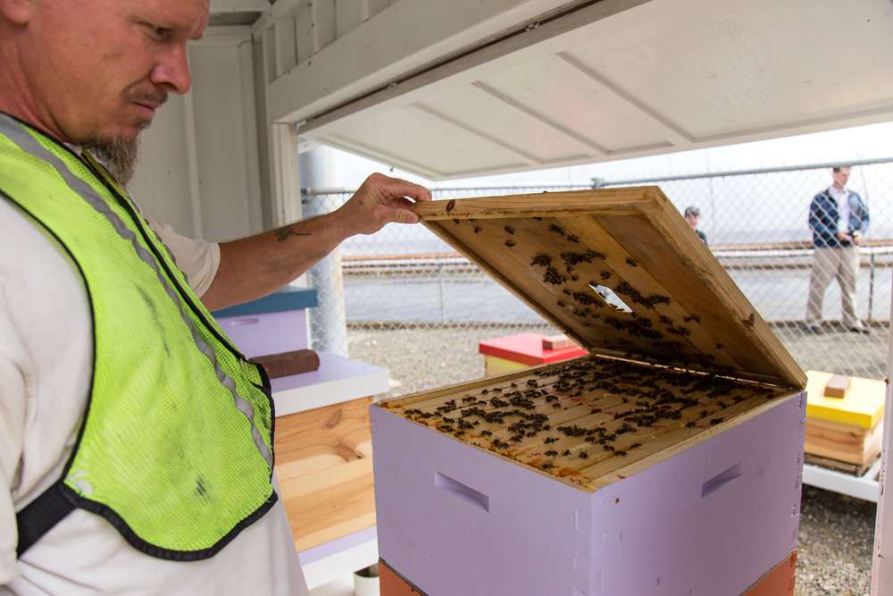 A beekeeper showing me the inside of a hive.