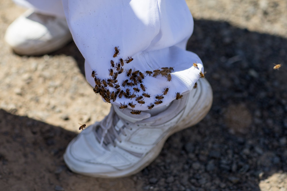Bees cling to an incarcerated individuals foot.