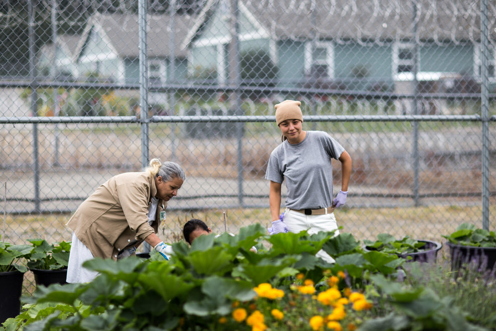Incarcerated individuals tend one of the gardens at Washington Corrections Center for Women.