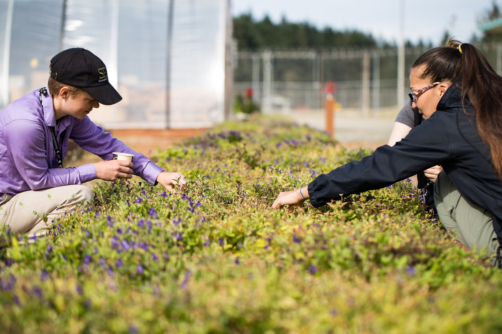 Sadie Gilliom (left), Fawn Harris (right), and other SPP Program Coordinators teamed up to pick violet seeds while the incarcerated crew was unavailable.