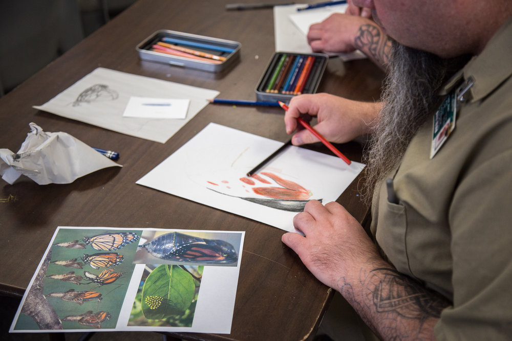 """The illustration workshop was developed around the essential relationship between milkweed and Monarch butterflies and —most importantly—how creating artwork about this relationship can inspire understanding of core issues facing the imperiled Monarch butterfly and actions we can take to preserve and restore this species."""
