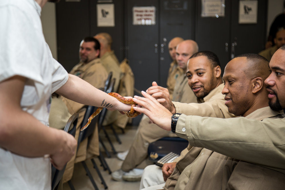 Incarcerated individuals at Stafford Creek Corrections Center overcoming fear and embracing reptiles during a lecture on snakes.