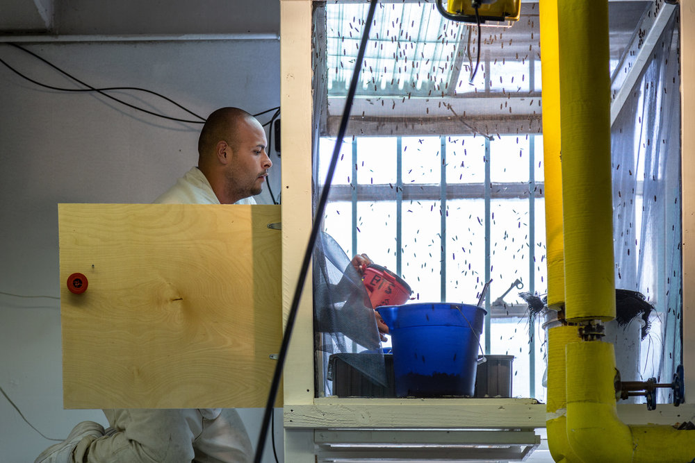 A composting technician in the world-class program at Monroe Correctional Complex tends to the black soldier flies. -