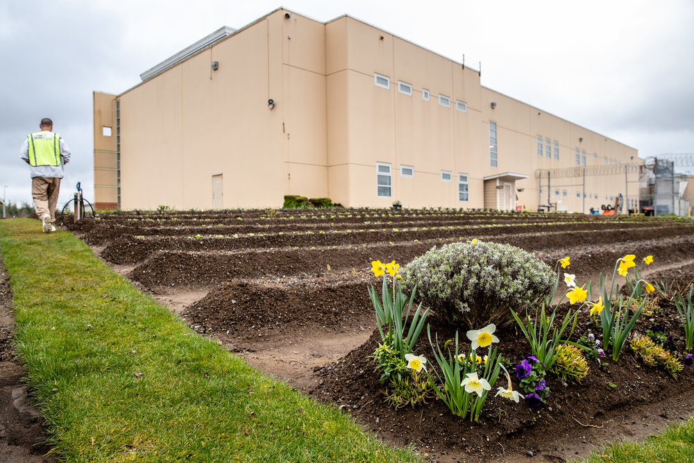 The Lifer Garden is designed, built and maintained by individuals serving life sentences. - -Stafford Creek Corrections Center