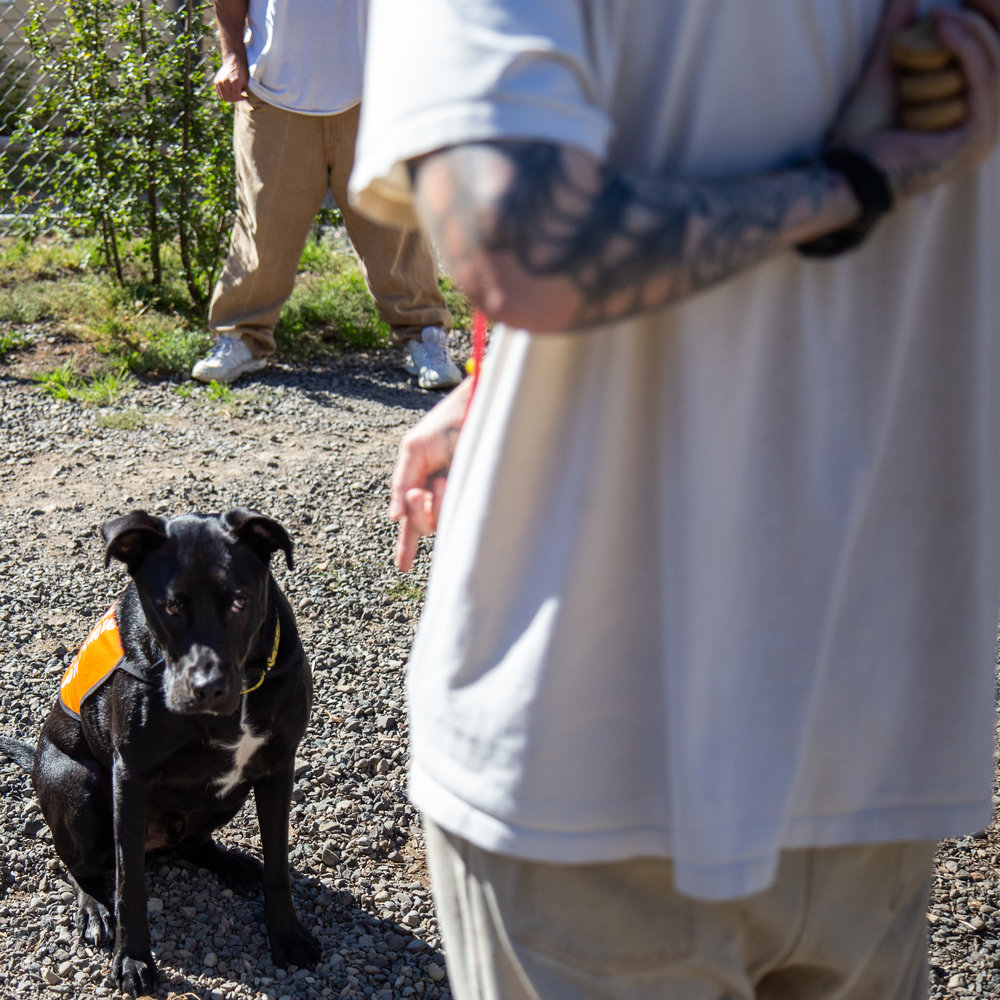 A dog trainer gets ready to give Buddy a treat. - -Olympia Corrections Center
