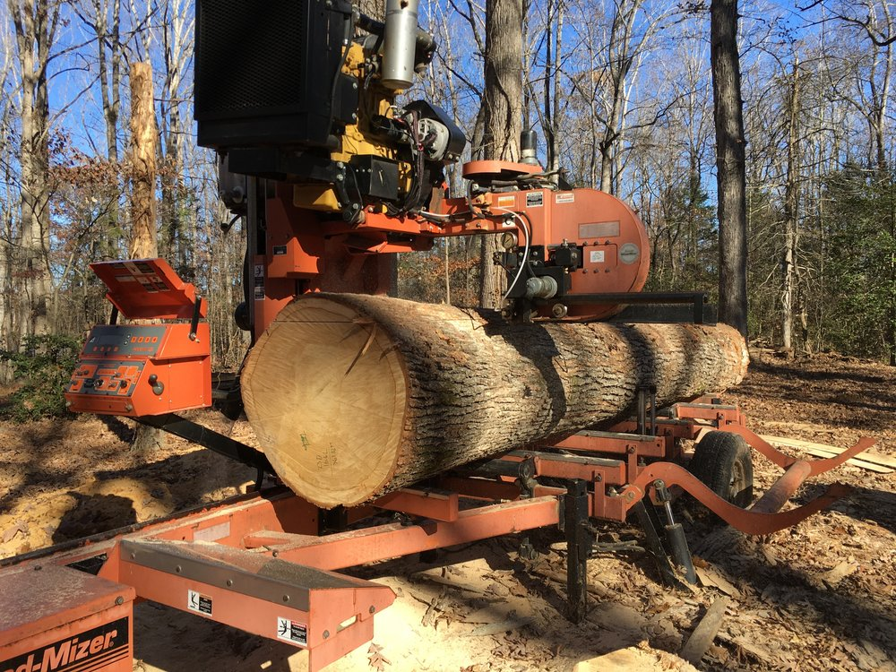 Cutting a white oak log into dimensional lumber with the bandsaw mill