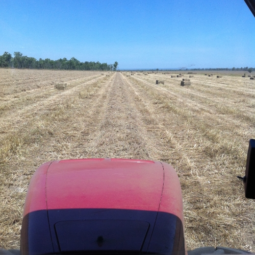 Photo- production of hay under way from the baler machine