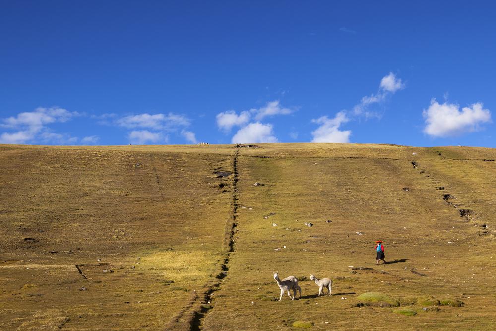 The Lone Herder.jpg