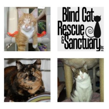 Support a sanctuary for blind, FELV+ &/or FIV+ cats