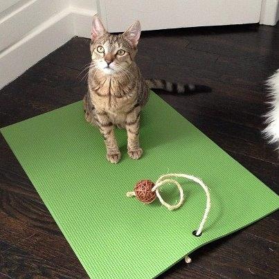 Feline Yogi - $24.99