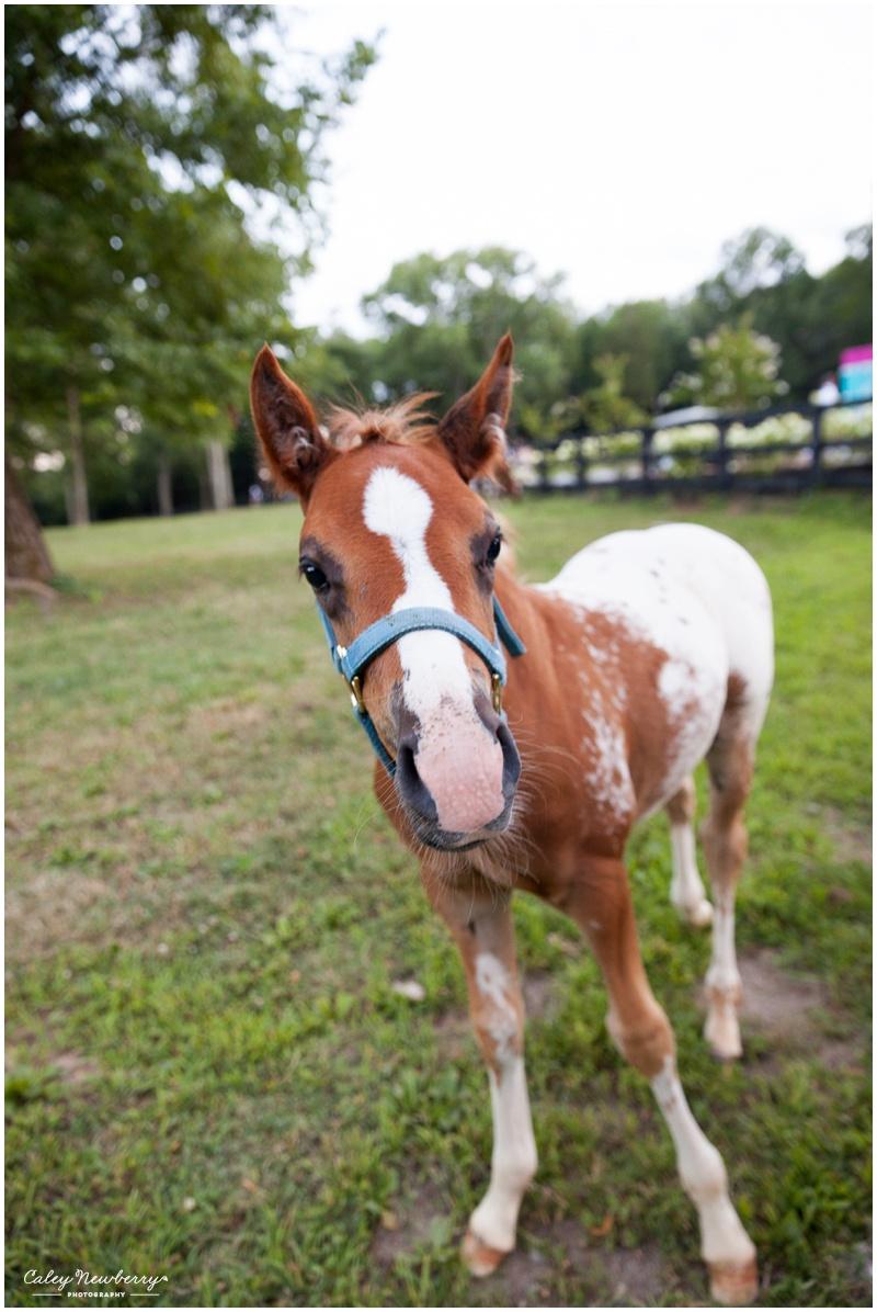 terian-farms-nashville-pony.jpg