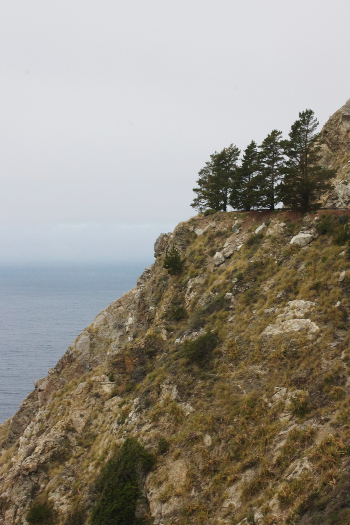 TreeCliffs.jpg