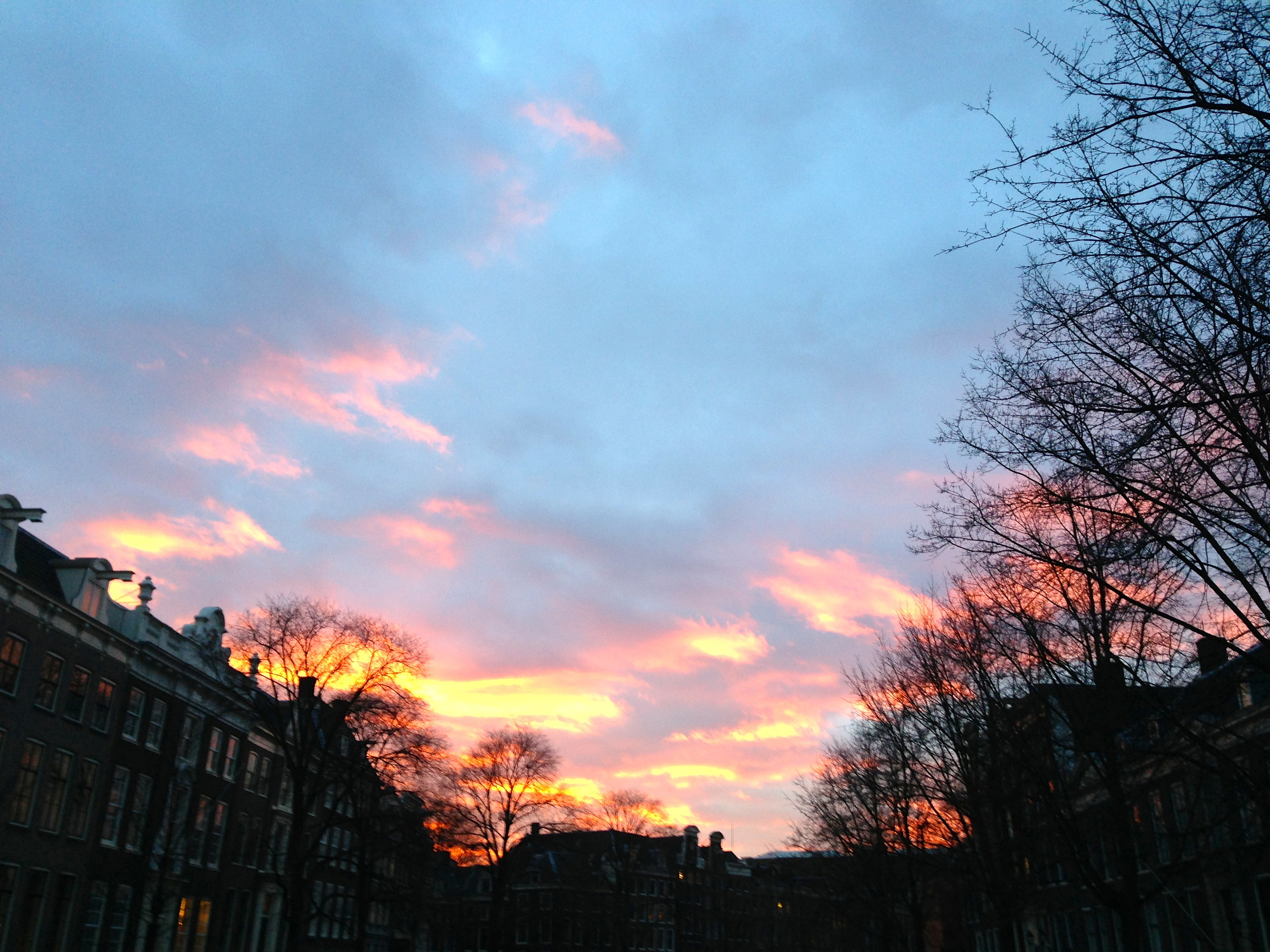 Amsterdam en rose
