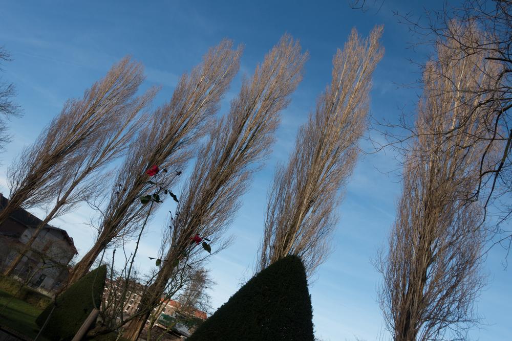 Winter Promenade_Artis_Photo by Canan Marasligil_-5.jpg