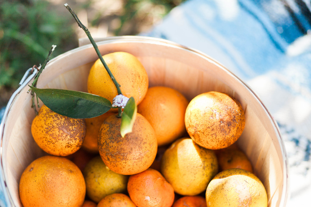 Beautiful Engagement Ring Shot set in Oranges | Michelle Mock Photography