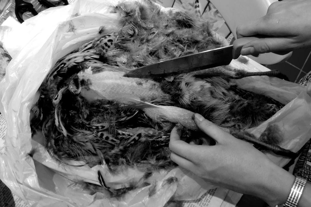 pheasant6.jpg