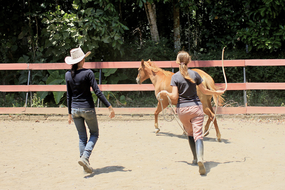 Natural horsemanship at Havana Horses, Salatiga.