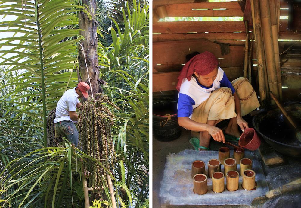 Harvesting and preparing palm sugar in Cianjur, Java.