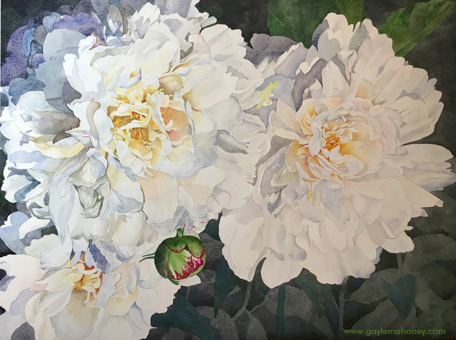 "Peonies, 24x18"", watercolor on hot press Arches paper"