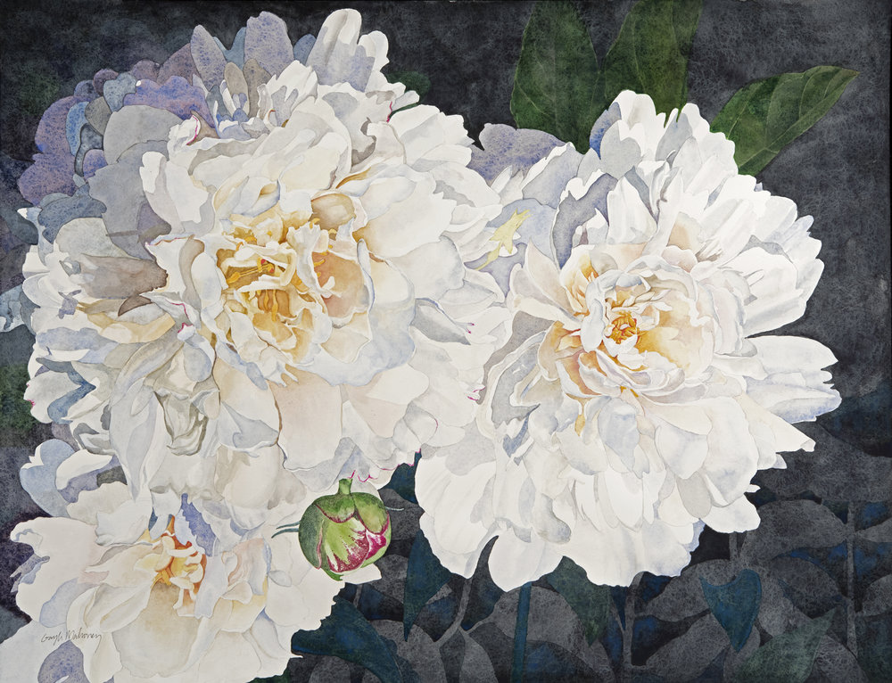 White Peonies , watercolor on paper, 24 x 18""