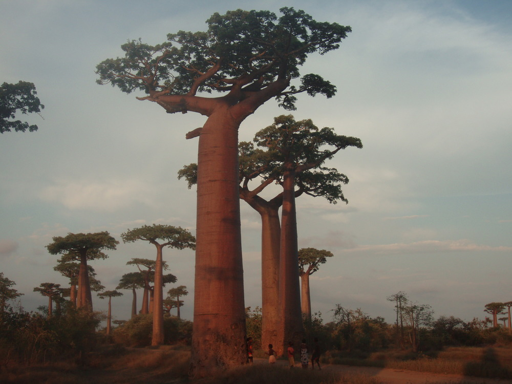 Africa 393.jpg