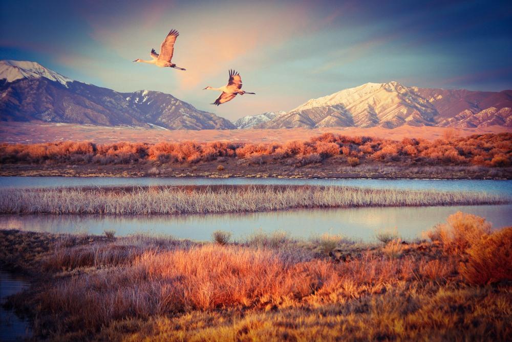 Sandhill Cranes Fly Over Wetlands Of Great Sand Dunes National Park