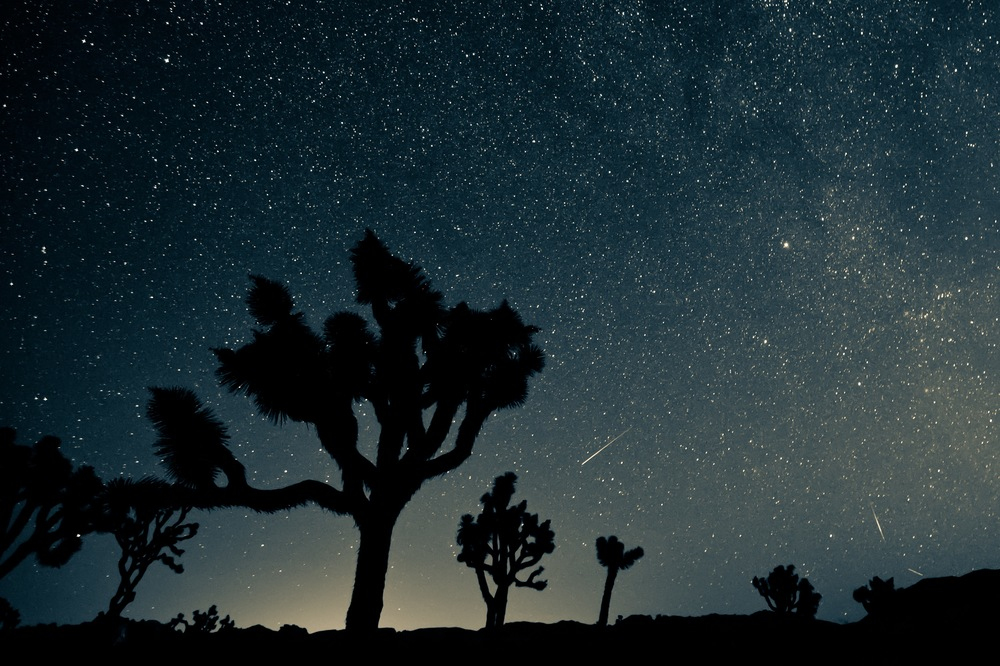 Perseid Meteor Shower Over Joshua Tree