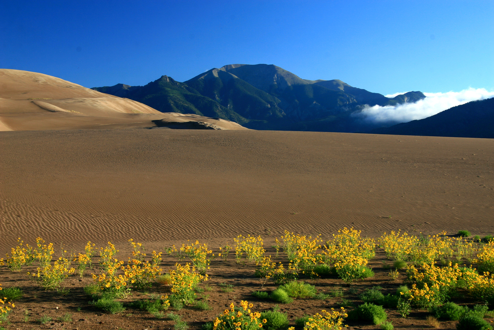 Sand Dunes & Sunflowers