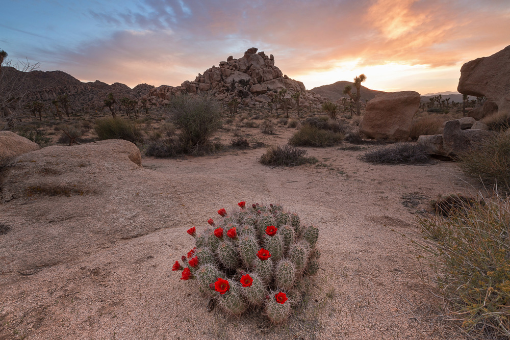 Blooming Cactus (Photo: Romiana Lee/Shutterstock)